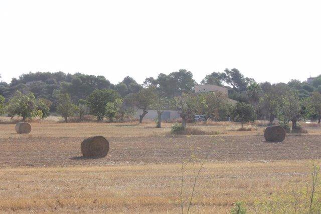 Un total de 282 agricultors professionals cobren les ajudes pel mantenimien