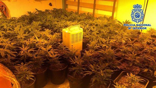 Detenido Un Varón Tras Ser Intervenidas 359 Plantas De Marihuana En Su Vivienda