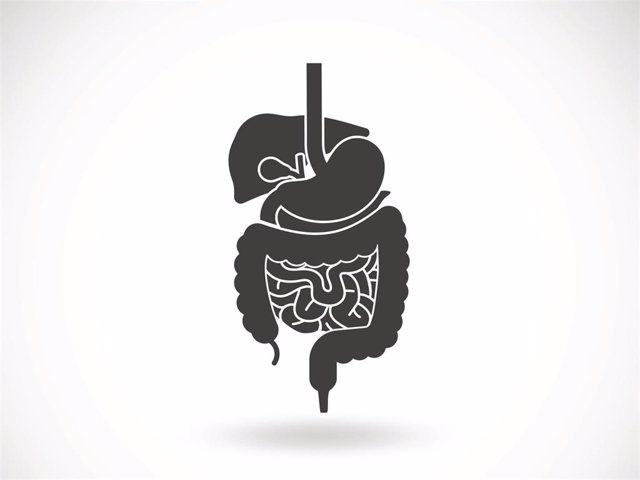Riñón, hígado, colon, intestíno