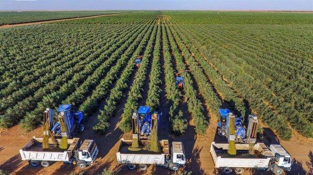 Jaén.- GEA firma el contrato para construir la mayor almazara de Asia en Arabia