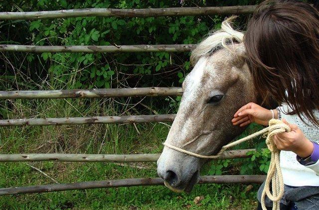 La terapia con caballos durante seis meses mejora síntomas en esclerosis múltipl