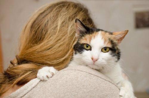 Los gatos contraen la inestabilidad emocional de sus dueños