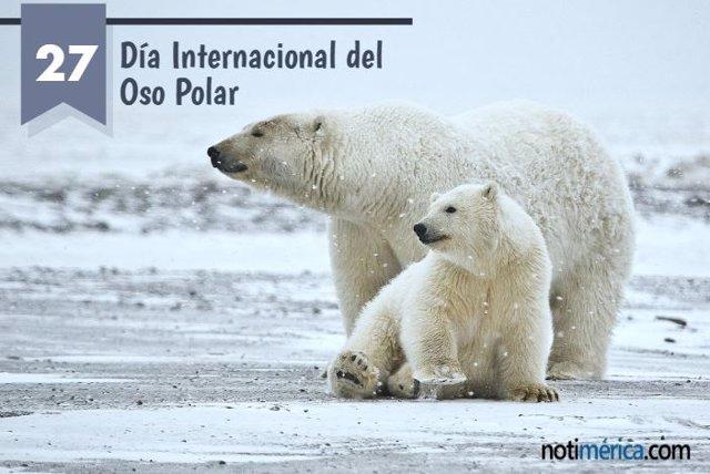 27 De Febrero: Día Internacional Del Oso Polar, ¿Por Qué Se Conmemora Hoy?
