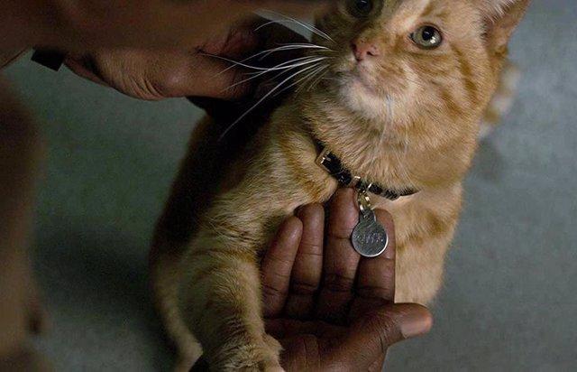 El gato de Capitana Marvel