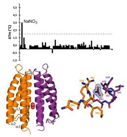Descrito por primera vez el mecanismo por el que las bacterias se mueven para co