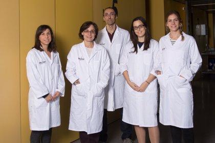 Hallan nuevas dianas para tratar el glioblastoma, tumor cerebral con pocas opciones terapéuticas