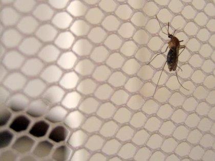 Aplicar antipalúdicos en las mosquiteras podría reducir la transmisión de la malaria