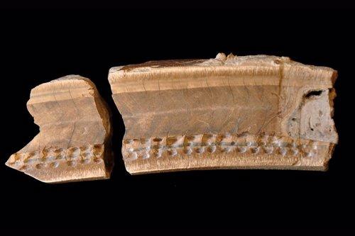 El ocaso de un extinto perezoso gigante, recreado con un diente