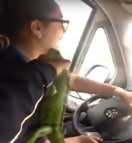 Denuncian con un vídeo a paramédicos mexicanos jugando con una iguana mientras c