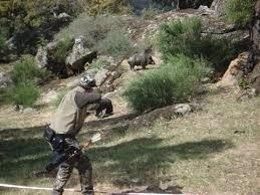 Aprova interpone dos denucias por dar muerte a jabalíes con arqueros.