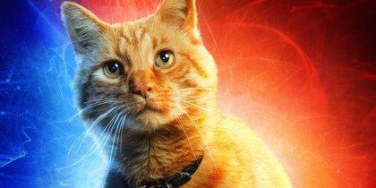 La kryptonita de Capitana Marvel son... los gatos