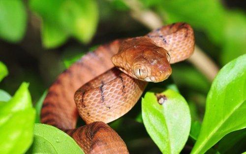 Especies invasoras, causa principal de extinciones globales recientes