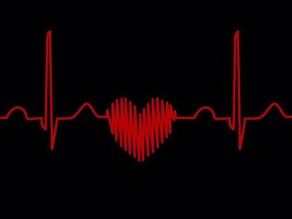 La desorganización de las fibras cardiacas repercute en las arritmias