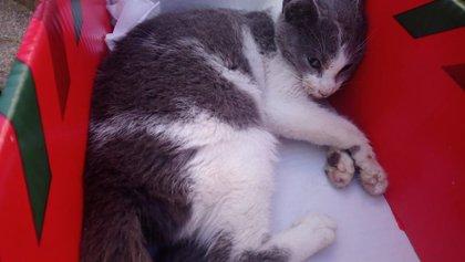 SPLA asegura que hasta 25 gatos han sido envenenados en Haro este año