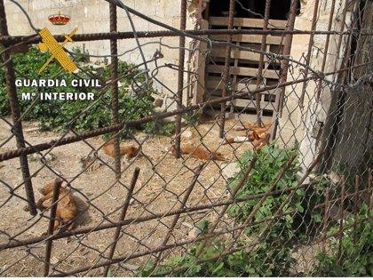 Investigado un vecino de Cazorla (Jaén) acusado de no tener en buen estado a sus perrros
