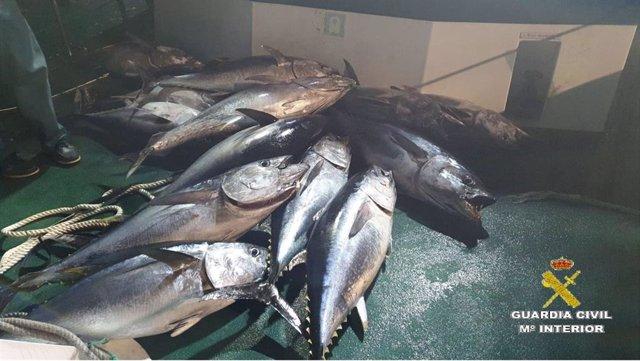 Cádiz.-Sucesos.- Intervenidos 760 kilos de atún rojo pescados de manera ilegal e
