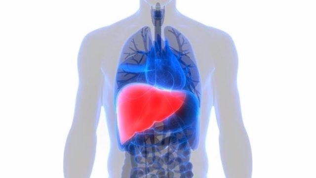 EEUU.-El cáncer se suele diseminar al hígado por la mayor susceptibilidad de los