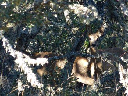 El 95% de los accidentes causados por animales en Burgos fueron provocados por fauna cinegética