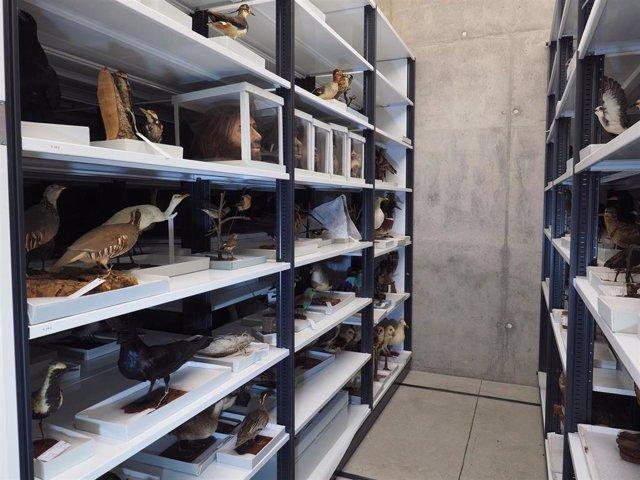 Los almacenes del Museo de Ciencias Naturales (Tenerife) albergan 250.000 regist