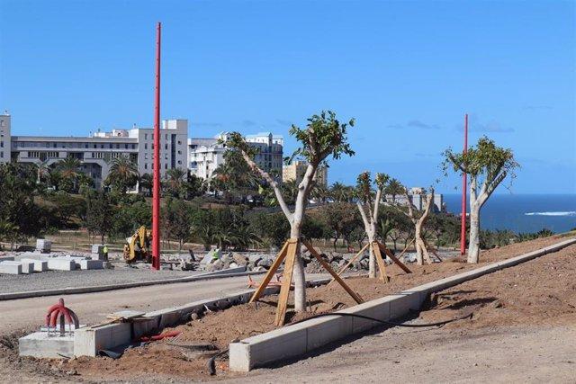 Trasplantan 25 árboles de la avenida Blas Cabrera Felipe hasta que acaben las ob
