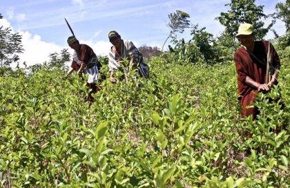 Los científicos prevén cambios en las precipitaciones para los cultivos incluso con reducción de emisiones
