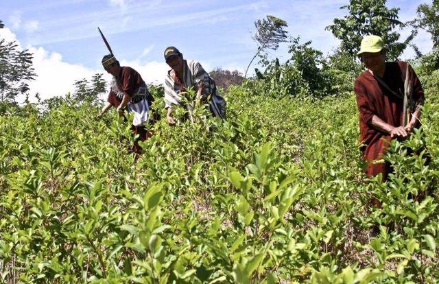 Los científicos prevén cambios en las precipitaciones para los cultivos incluso