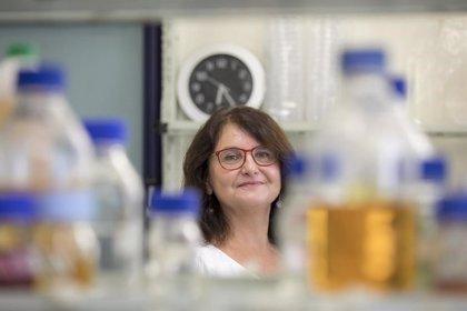 La higiene excesiva puede favorecer la resistencia a los antibióticos
