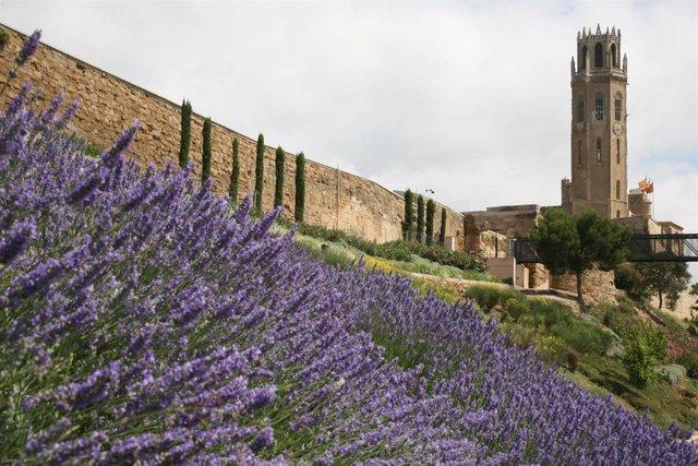 Batet recolza la candidatura a Patrimoni Mundial del Turó de la Seu Vella de