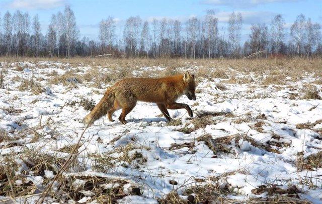 Crean un mapa mundial de vida silvestre con 'lugares fríos' y 'puntos calientes'