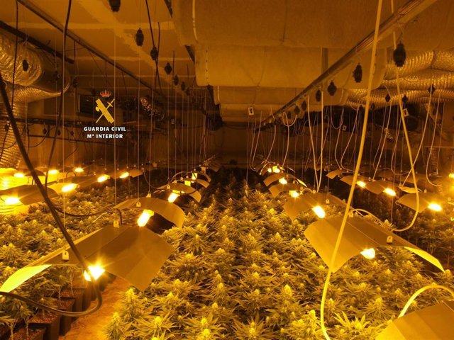 Málaga.- Sucesos.- La Guardia Civil desmantela una plantación de marihuana en Ro