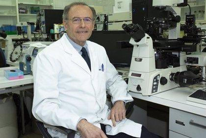 Descubierta la alteración que causa un contaminante en el desarrollo del miocardio embrionario
