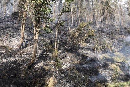 Más de 6.000 hectáreas de 51 municipios se quemaron en Cantabria en 16 días de febrero