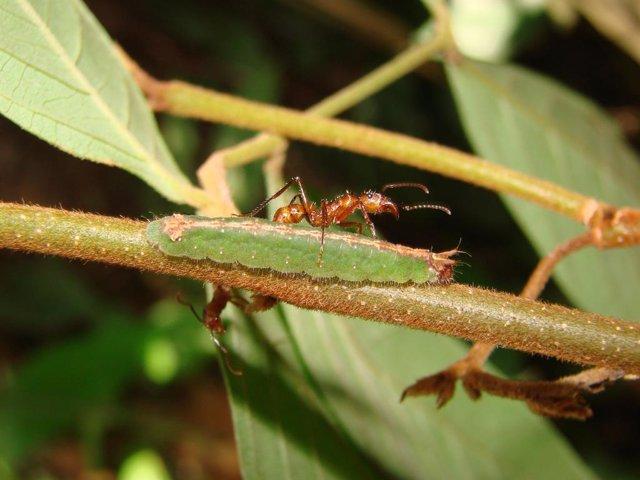 Las plagas impulsan la diversidad en las selvas tropicales
