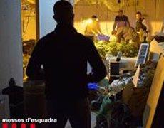 Tres detinguts per assaltar una casa a Tarragona per robar una plantació de marihuana (MOSSOS D'ESQUADRA)