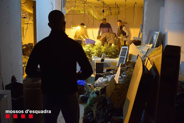 Successos.- Tres detinguts per assaltar una casa a Tarragona per robar una plant