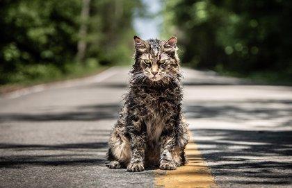 """Primeras y positivas críticas de Cementerio de Animales: Una adaptación """"salvaje"""" Stephen King"""