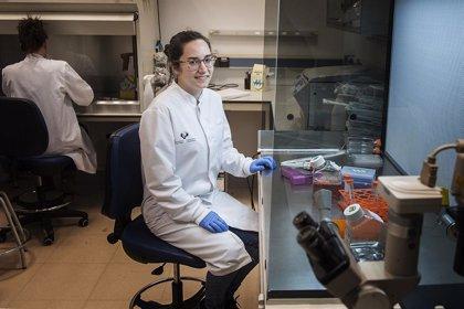 Investigadores crean un nuevo apósito para heridas crónicas