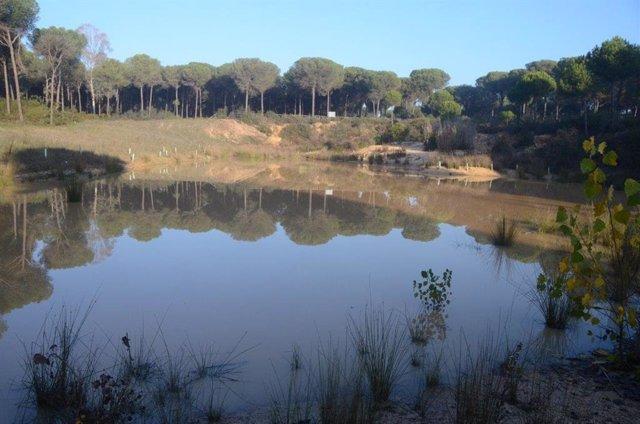 Humedal del Lince, en Doñana