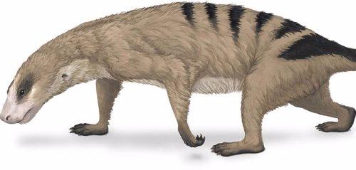 Los brazos únicos de los mamíferos surgieron antes de los dinosaurios