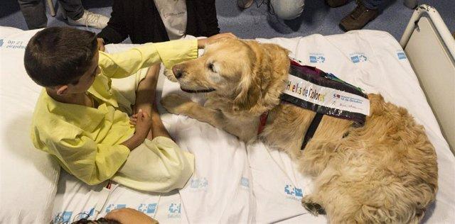 La terapia asistida con perros demuestra disminuir el dolor y la ansiedad de niñ