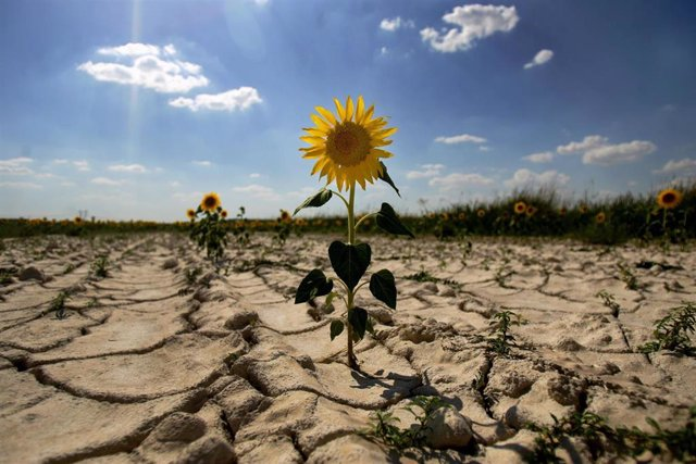 Signos de desertización en España