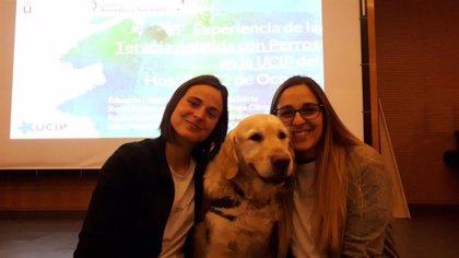 Zenit, el perro de terapia cuya presencia ayuda a aliviar el dolor y la ansiedad de los niños hospitalizados