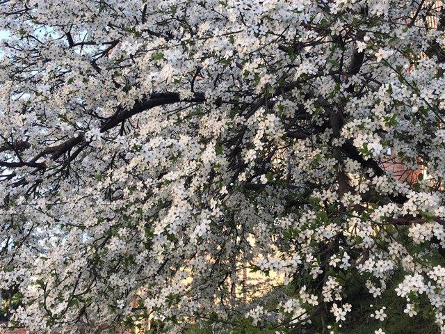 La primavera comienza el próximo miércoles a las 22.58 horas y durará 92 días