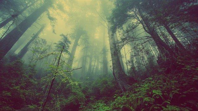 21 De Marzo: Día Internacional De Los Bosques, ¿Por Qué Se Celebra Hoy Esta Efem