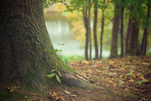 Día Internacional de los Bosques, una celebración donde Iberoamérica tiene pocos