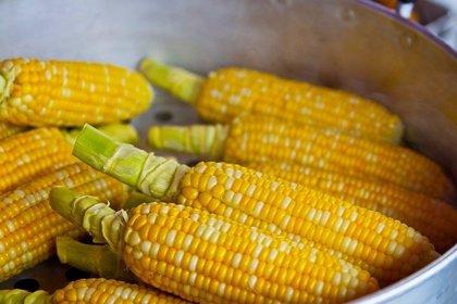 El jarabe de maíz rico en fructosa estimula el crecimiento de tumores intestinales en ratones