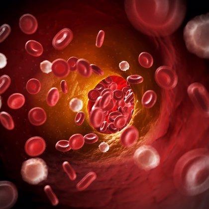 Unos anticuerpos controlan la aterosclerosis para evitar que se produzca un coágulo