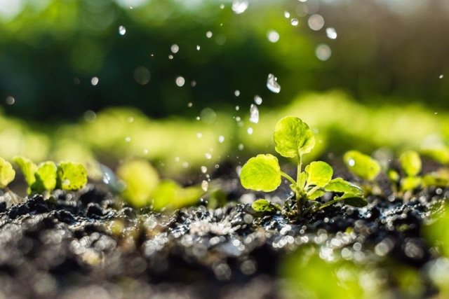 Agua.- El consumo de agua para riego se redujo un 15% por hectárea en los último