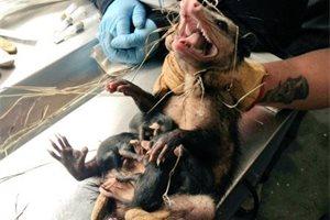 Encuentran un sorprendente animal en el capó de un coche en Bogotá