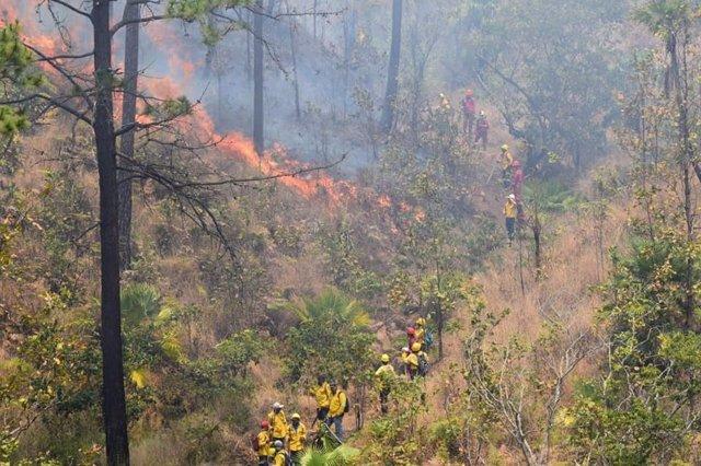 Los incendios forestales acaban con más de 10.000 hectáreas en Honduras en lo qu